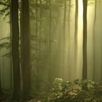 SaarForst Landesbetrieb bietet bürgerfreundlichen Service für Anregungen und Anfragen