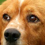 Hund vor Hitzetod gerettet