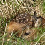 Brut- und Aufzuchtzeit vieler  Wildtiere beginnt am 1. März