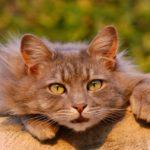 Niederlinxweiler: Katze mit Köder vergiftet