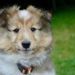 Tholey-Bergweiler: Wer streut Scherben auf einem Hundesportplatz aus?