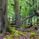 Umwelt-Campus Birkenfeld: Zeitreise durch den Wald