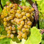 Otzenhausen: Römischer Wein – Weinprobe im Keltenpark