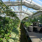 St. Wendel: Tag der offenen Gärtnerei auf dem Wendelinushof