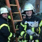 Alsweiler: Feuerwehr rettet Katze Lennie