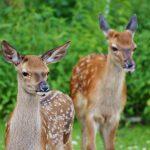 St. Wendel: Zunahme von Wildunfällen