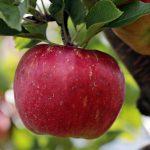 26. Tag des Obstbaumes im Landkreis St. Wendel