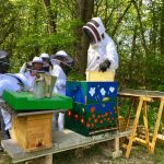 Diebstahl von mehreren Bienenvölkern in Nonnweiler