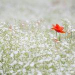 St. Wendeler Land: Tag der offenen Gärten