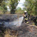 Sötern: Feuerwehr verhindert Ausbreiten eines Vegetationsbrandes
