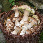 Heisterberg: Kulinarische Pilzexkursion mit Fundbesprechung