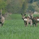 Landkreis St. Wendel: Gefahren durch Wildtiere im Straßenverkehr