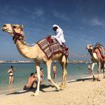 Reisetipps für Dubai- Zwischen Wüste und Wolkenkratzern