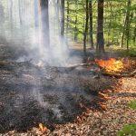 Waldbrand zwischen Tholey und Dirmingen konnte schnell gelöscht werden.