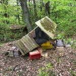 Oberkirchen: Bienenstand beschädigt