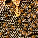 Tholey: Heilkraft aus dem Bienenstock