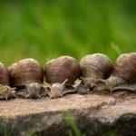 Tholey/Gronig: Rund 60 Forscher wollen an Pfingsten Geheimnisse der saarländischen Schneckenfauna lüften