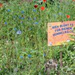 """St. Wendel: """"Der Kreis St. Wendel blüht auf"""" – neues Saatgut ist eingetroffen"""