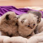 Namborn. Junge Katzen ausgesetzt