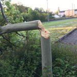 St.Wendel: Unbekannte fällen gesunden Baum