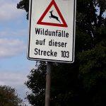 St. Wendel: Neue Schilder sollen Wildunfälle verhindern