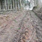 Winterbacher Bürger geben ihrem Wald eine Stimme
