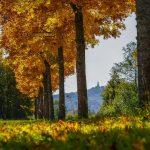 Herbstferienprogramm der Gemeinde Tholey