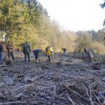 St. Wendel: 500 neue Bäume gepflanzt