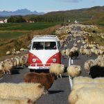 St. Wendel: Mit Peter Gebhard und dem T1-Bulli Erwin 10.000 Kilometer durch Island
