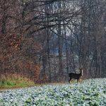 Brutzeit heimischer Wildtiere beginnt – Minister Jost: Jungtiere nicht anfassen