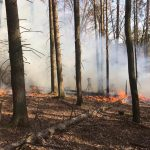 Waldbrand in Nohfelden