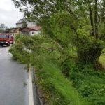 Viele umgestürzte Bäume im Landkreis