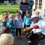Bienenschutz im Globus St.Wendel