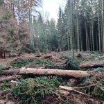 """Bürgerinitiative """"Wir für den Wald"""" fordert eine """"Waldwende, und zwar jetzt!"""""""
