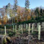 Aufforstungen im Gemeindewald Freisen