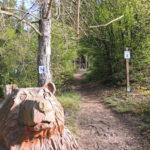 Wandern im St. Wendeler Land: der Bärenpfad